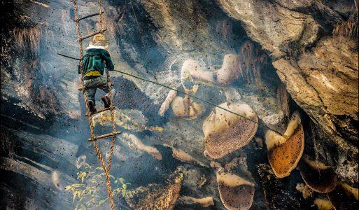 In Nepal esiste un posto in cui le api creano un miele allucinogeno molto utilizzato dai villaggi locali